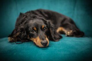 https://www.veterinaire-94-lecoz.com/wp-content/uploads/2016/11/chien-noir-or-bd-320x213.jpeg