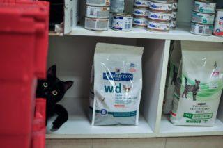 https://www.veterinaire-94-lecoz.com/wp-content/uploads/2016/12/croquette-dietetique-320x213.jpg